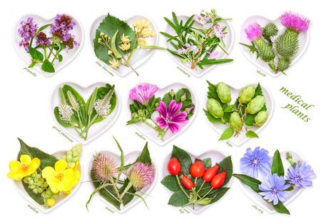 Alternative Medicine with medicinal plants 3