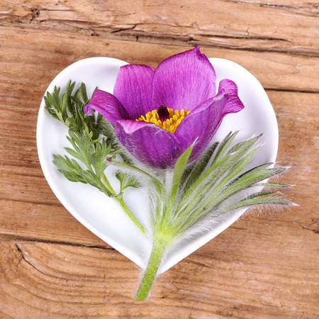 pulsatilla: Homeopathy and cooking with pulsatilla