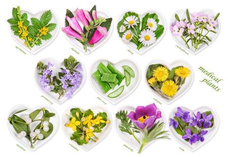 Alternative Medicine with medicinal plants