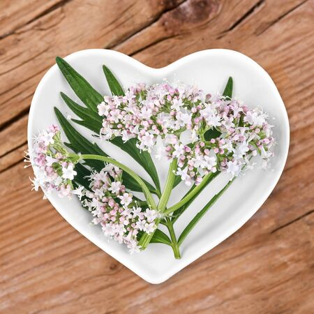 valerian: Homeopathy and cooking with valerian
