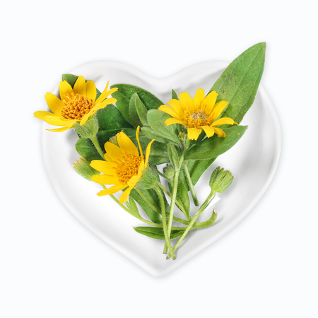 Homeopathy and cooking with arnica