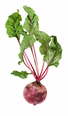 Single, isolated beetroot vegetables with leaves Standard-Bild