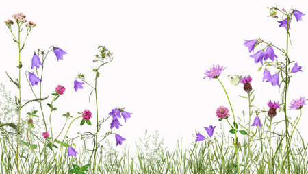 Meadow with wild flowers, isolated