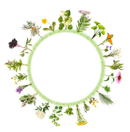 Round frame with many different medicinal plants