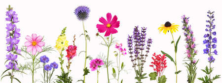Selection of various colorful garden flowers, isolated 免版税图像
