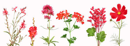 Selection of red garden flowers