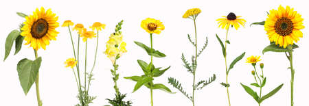 Selection of yellow garden flowers 免版税图像