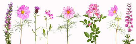 Selection of pink garden flowers
