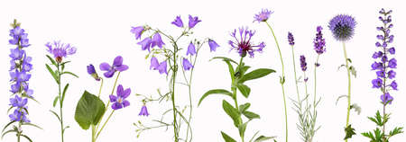 Selection of violet garden flowers