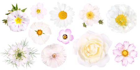 Group of different white garden flowers, isolated