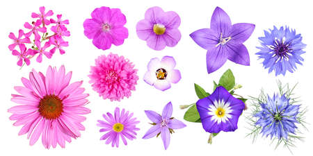 Group of different pink, violet and blue garden flowers, isolated