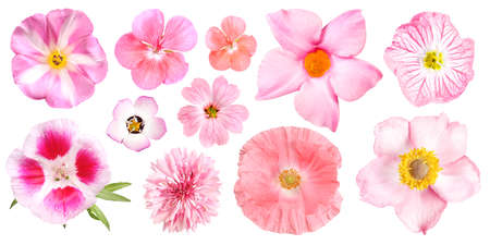 Group of different pink garden flowers, isolated 免版税图像
