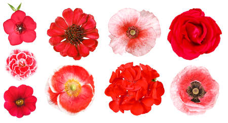 Group of different red garden flowers, isolated 免版税图像