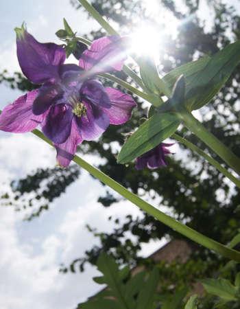 vin: Vin Flower