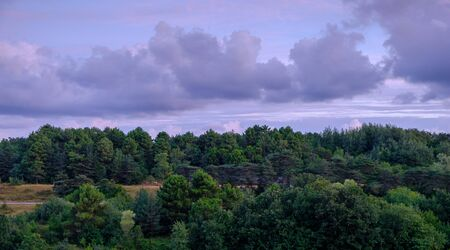 Istanbul, Turkey. View of the forest at sunrise