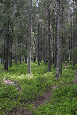 trecking: Forest
