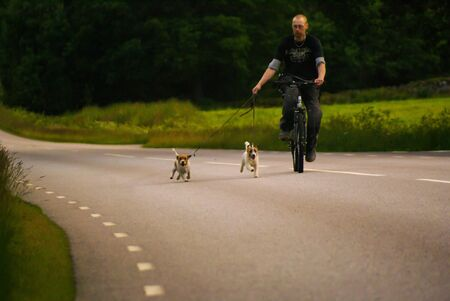man: Man cycling with his dogs