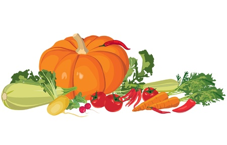 Still life with autumn abundance, ripe vegetables  Stock Vector - 15383097
