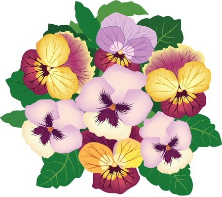 flower bouquet with white, yeallow and lilac pansy  Vector