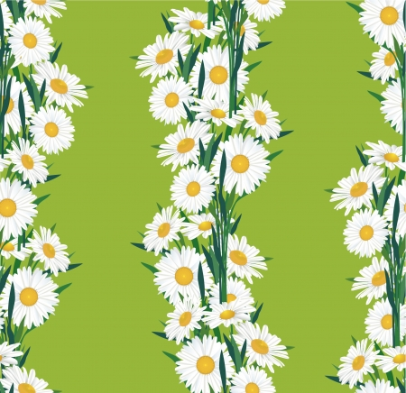 Flower chamomile seamless  background  Vector
