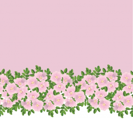 Dog roses seamless floral border on pink background  Vector