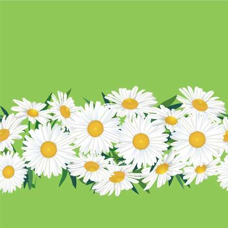 camomile tea: Chamomiles seamless floral border on green background