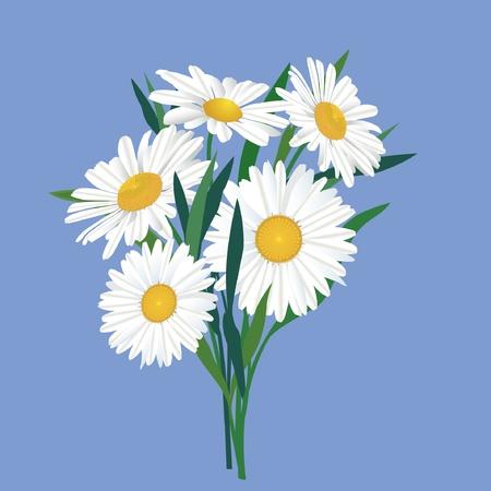 yellow wildflowers: Chamomiles bouquet
