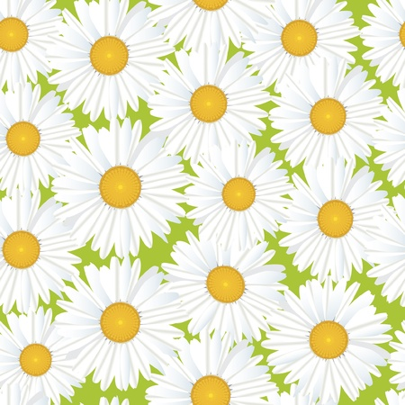Flower chamomile seamless pattern  Floral background  Vector