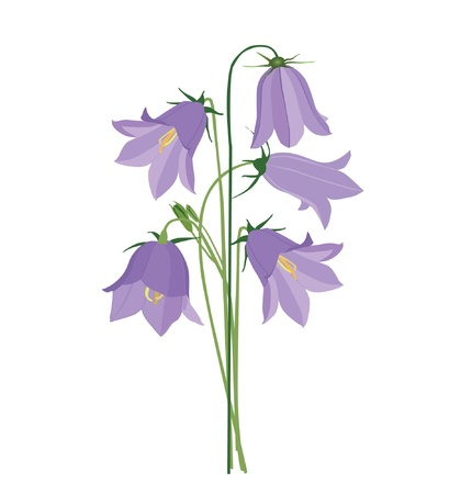 bouquet of blue flowers bluebell  Vector