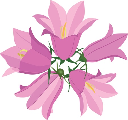 flower bouquet with pink bluebell  Vector