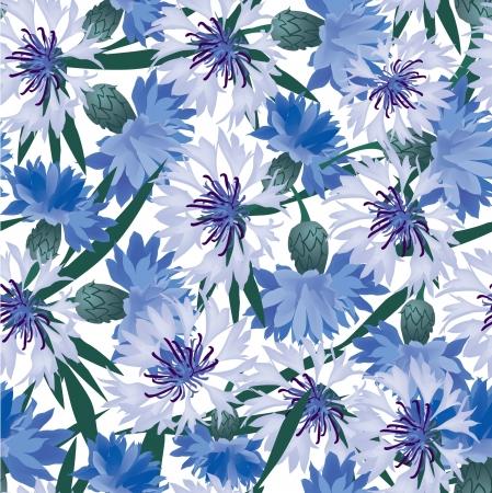 Cornflower: floral background  seamless pattern with blue cornflower Illustration