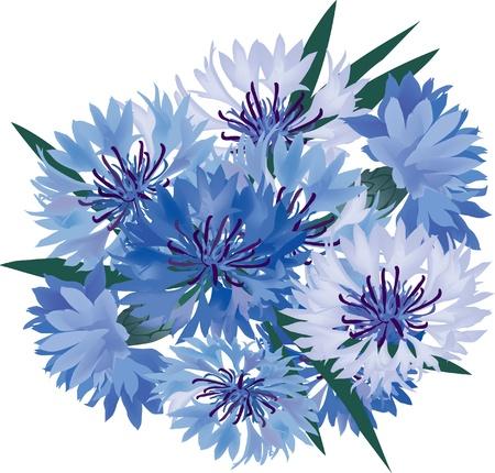 fiordaliso: bouquet di fiori dal blu e lilla fiordaliso Vettoriali
