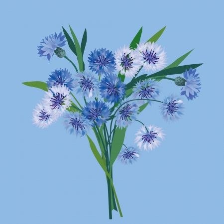 flower bouquet from blue and lilac cornflower