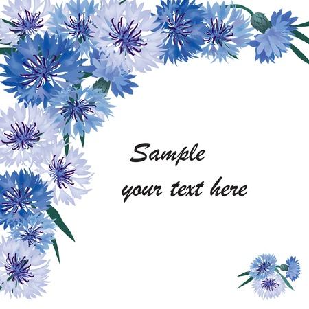 fiordaliso: cornice floreale con carta di auguri con copia spazio bluette