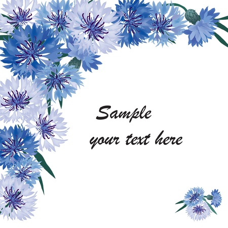 wildflowers: floral frame with copy space  Greeting card with blue cornflower Illustration