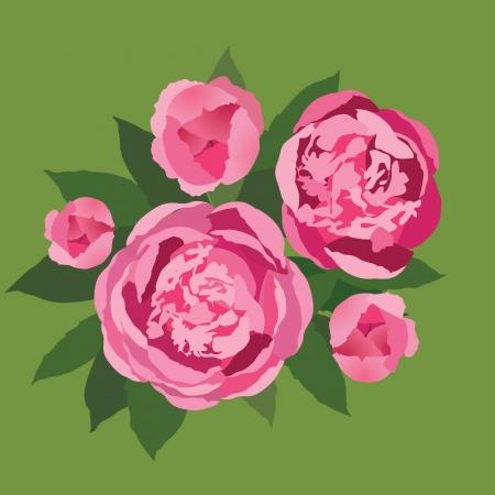 pfingstrosen: Blumenstrauß mit rosa Blumen Pfingstrosen Illustration