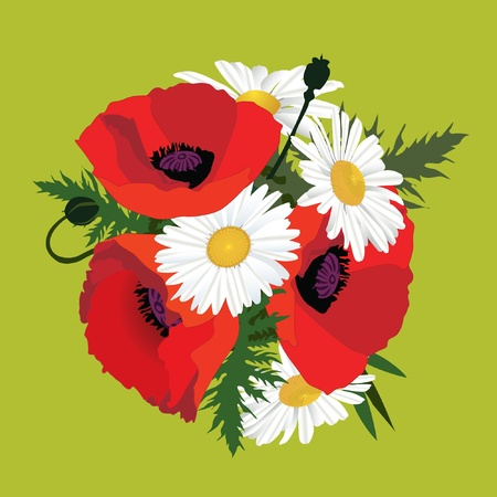 Flower poppy bouquet with chamomiles, meadow flowers  Vector