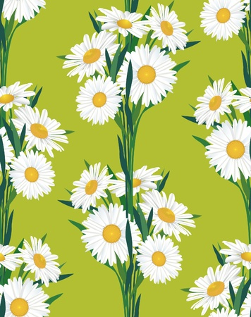 floral seamless pattern  chamomile background  Vector