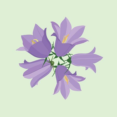 flower bouquet from lilac bluebells  Vector