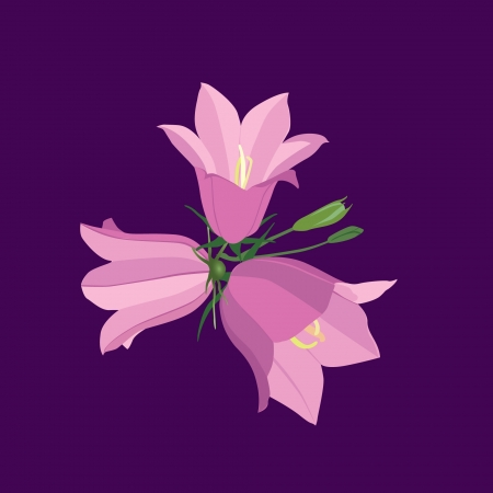 an inflorescence: bouquet of pink bluebell flowers, meadow field flowers  Illustration