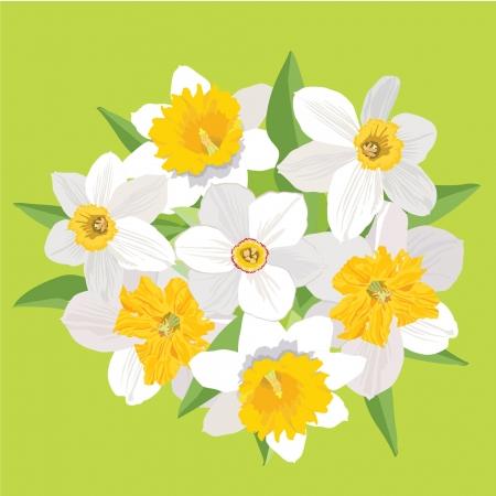 an inflorescence: flower bouquet  flowers daffodils