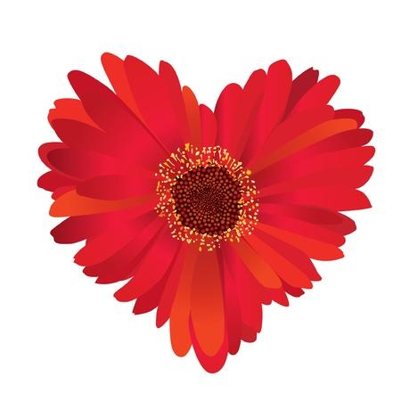 wild flowers: bloem gerbera love heart Stock Illustratie