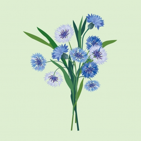 flower bouquet from blue and lilac cornflower  Vector