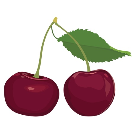 Cherry  Ripe berry   Stock Vector - 16229147