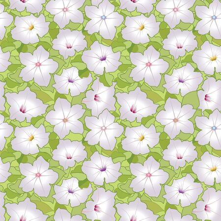 petunia: floral seamless background with white flower petunia
