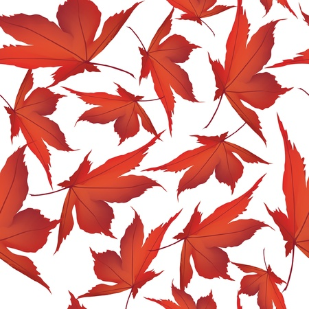 japanese maples: Autumn maple leaves seamless pattern background  Illustration