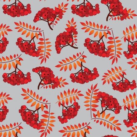 ashberry: Rowan berry seamless texture  Autumn ashberry vector illustration
