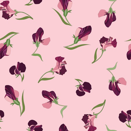seamless pattern with lilac and pink flowers sweet peas on pink background  Vector