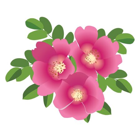 bouquet with pink flowers dog rose  Vector