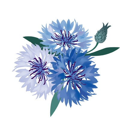 fiordaliso: bouquet di fiori vettore fiordaliso blu illustrazione Vettoriali